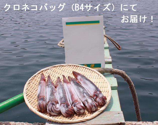 船凍イカ(6ハイ入)